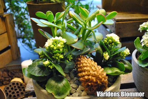www.varldensblommor.se Världens Blommor