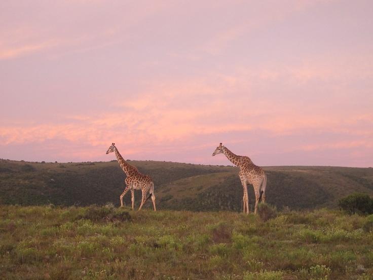 Near Port Elizabeth, South Africa