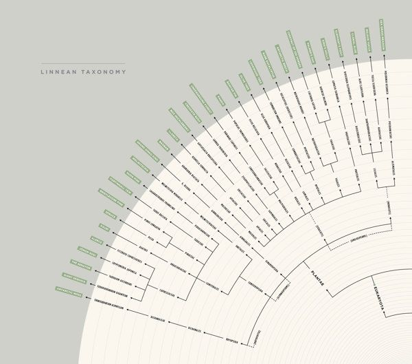 The Oldest Living Things in the World by Michael Paukner, via Behance