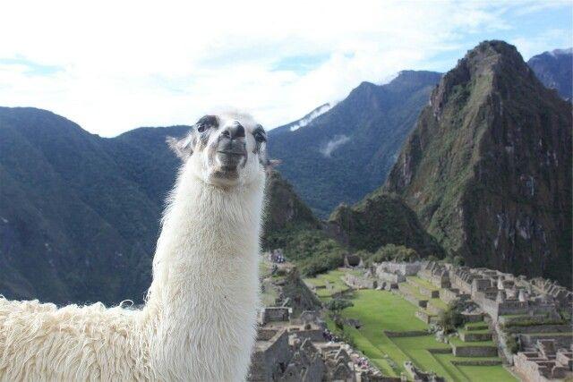 Alpaca wool is the authentic Inca´s treasure! #sustainablefashion