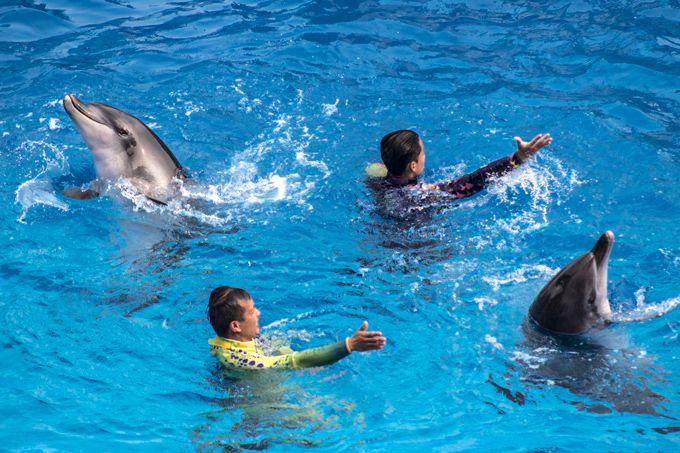 7 Things to Do in Ocean Park, Hong Kong