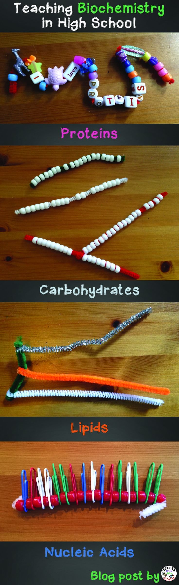 Molecular models science teachers can use to show proteins, nucleic acids, carbohydrates, and lipids.  Blog post by Bethany Lau at Science and Math with Mrs. Lau