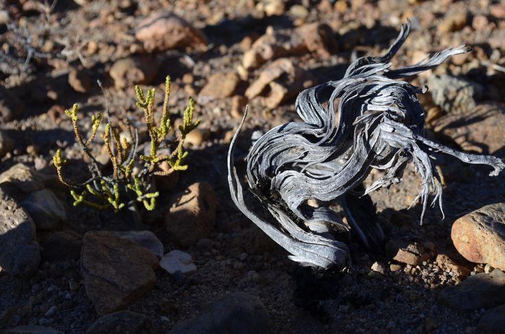 Vegetación del altiplano.
