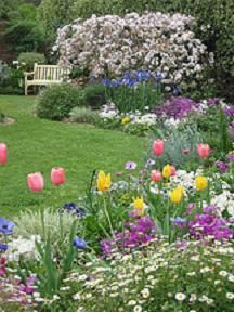 images about Bulbs on Pinterest Gardens Photographs and