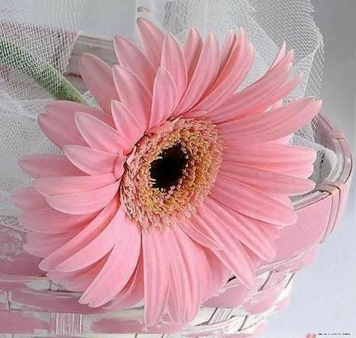 Pin By Holly2 On More Picture Perfect Petals Photography Beautiful Flowers Pictures Good Morning Flowers Flowers