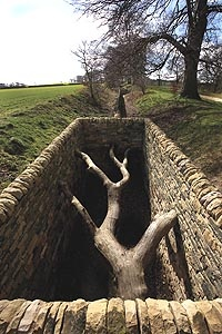 Andy Goldsworthy. Hanging Trees. Oxley Bank. Yorkshire Sculpture Park. 2006