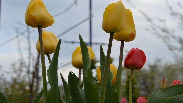 Весна цветение!  Цветы в нашем саду!  Названия.
