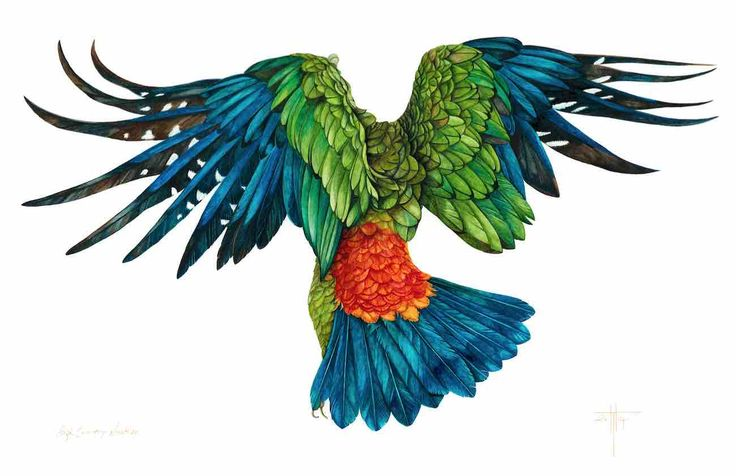 'High Country Weather' 2015 New Zealand Kea. water colour painting©Helen Taylor (original photographer unknown)