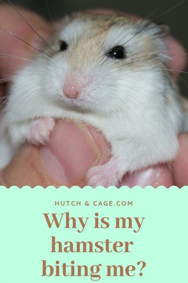 6d1b24c3364c3224af8254e467f0669d - How To Get My Hamster To Stop Biting His Cage
