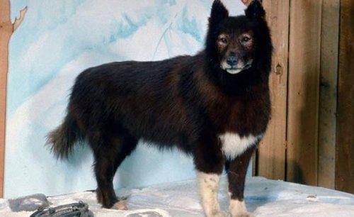 Невероятные истории о собаках-спасателях