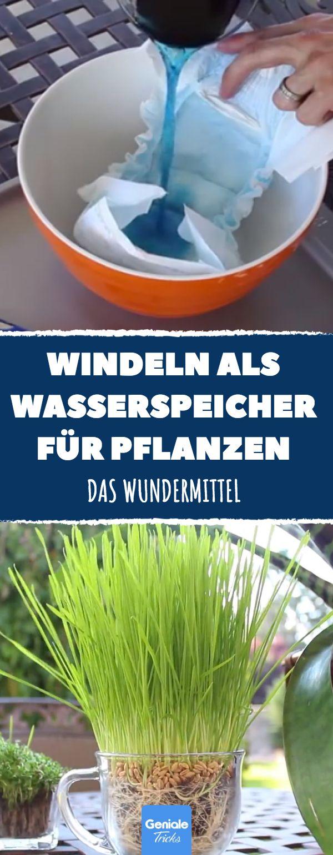 Granulat aus Windeln ist perfekt um deine Pflanzen zu bewässern #garten #tricks #windel #bewaesserung #pflanzen