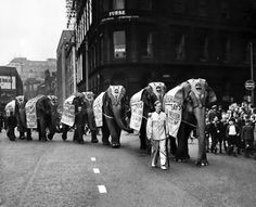 Bertram Mills circus elephants arrive in Manchester. The six Bertram Mills circus elephants, bearing road safety slogans, leave Central Station on route for Platt Fields, where the circus is being held for a week. September 1952 #Vintage #Classic #Old #Retro #Historic #OldFashioned #Manchester #MCR #NorthWest #photos #photographs #pictures #images #prints