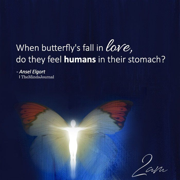When Butterfly S Fall In Love Funny Love Falling In Love Quotes Butterfly Quotes