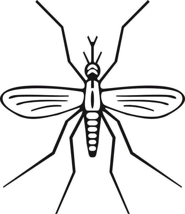 Insect, Malaria, Mosquito, Pest, Animal