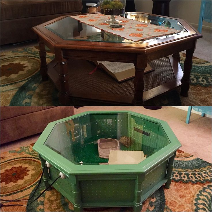 Best 25 lizard habitat ideas on pinterest home lizard for Coffee table enclosure