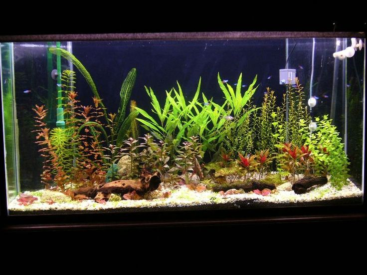 Allgemeine Informationen zum Aquarium Einrichten für Anfänger