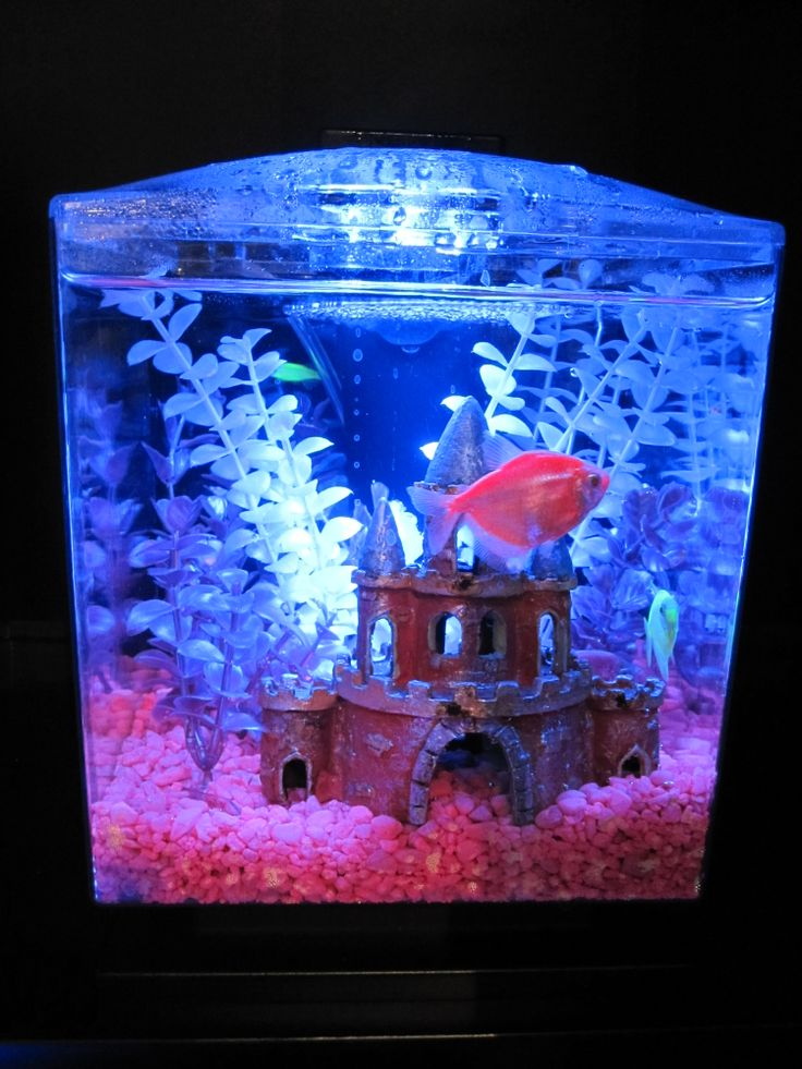 70 best images about glofish on pinterest glow neon and for Tetra fish tank
