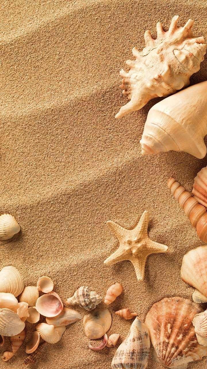 картинки с песком и ракушками урезал