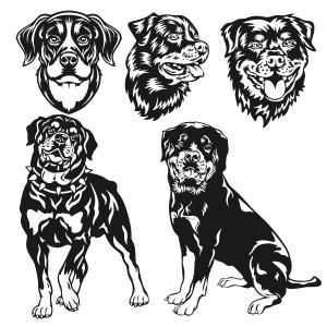 Rottweiler dog Cuttable Design Cut File. Vector, Clipart, Digital Scrapbooking Download, Available in JPEG, PDF, EPS, DXF and SVG. Works with Cricut, Design Space, Sure Cuts A Lot, Make the Cut!, Inkscape, CorelDraw, Adobe Illustrator, Silhouette Cameo, Brother ScanNCut and other compatible software.