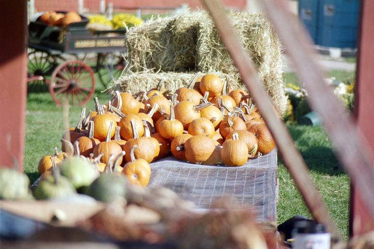 The 7 Best Pumpkin Picking Destinations In NY, NJ, Conn. - CBS New York