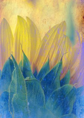 metal canvas Other sunflower nature flora closeup texturized vintage petals photograph