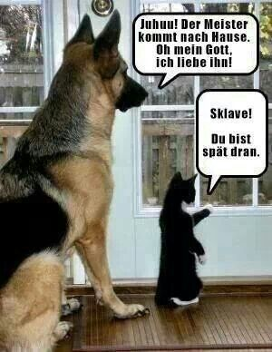 Hund = Dienner|Katze = König
