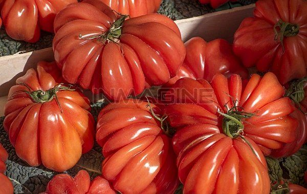 Market, Cours De Selaya, Nice, France, Europe Stock Photos / Pictures / Photography / Royalty Free Images at Inmagine