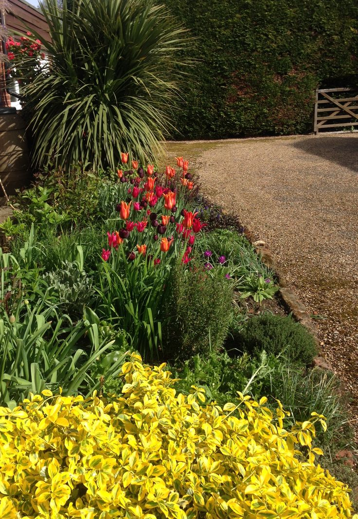 Sarah Raven Perch Hill tulip collection in flower April 2017