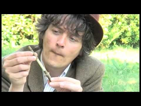 Making a Sycamore Whistle:  I just found a good video with very clear instructions on how to make a sycamore whistle that I thought you'd enjoy. I have never used sycamore in making my own whistles but Nathan says that sycamore is a member of the maple family. I've always used maple or willow but now I'll have to see how sycamore works as it seemed to work well in the video.