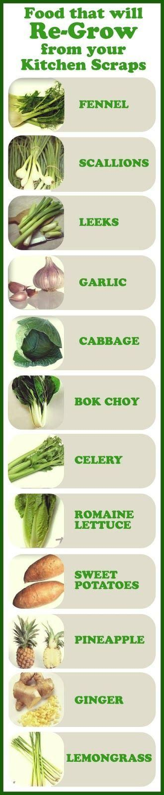 Foods that will re-grow from kitchen scraps... The ability to grow most of these vegetables from their leftovers is as simple as sticking the bottom end of them into a well-prepared patch of good soil and making sure their bed is kept moist.