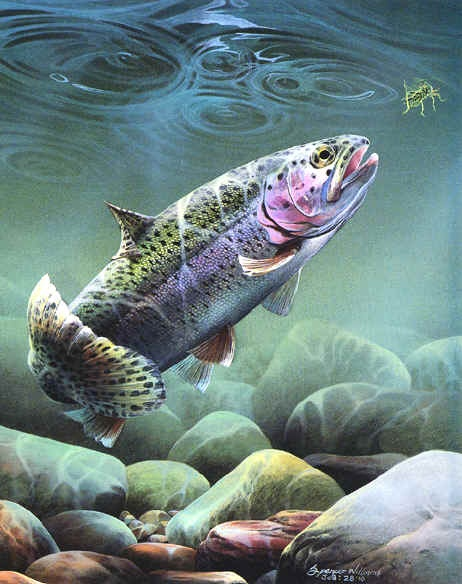 17 best images about painting inspirations on pinterest for Trout fish pictures