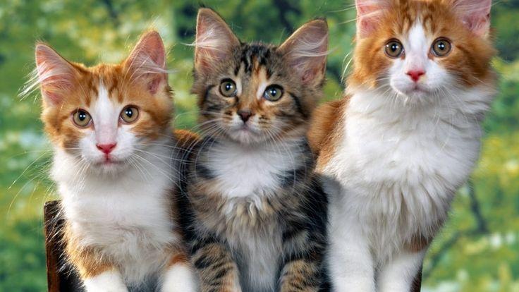 Gatos bebe Animales para niños y bebes Videos infantiles de pequeños gatos