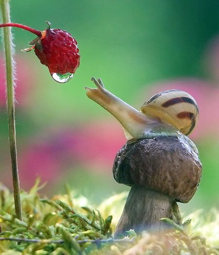 Macro Photos of Snails  - captured using a macro lens by talented Ukrainian photographer Vyacheslav Mishchenko.