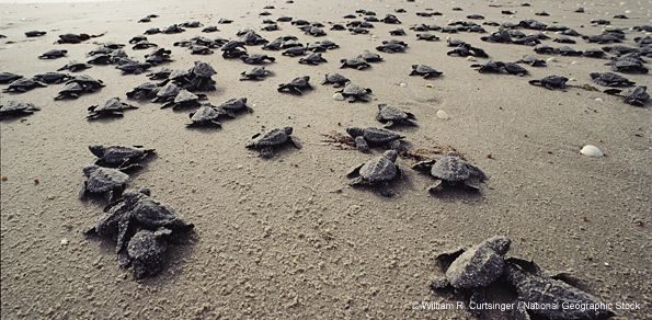 Another Record-Breaking Year for Cape Hatteras Sea Turtles