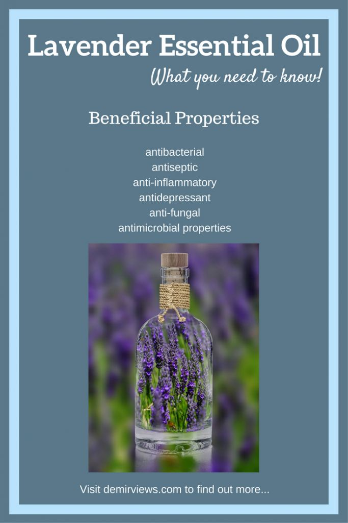 Lavender Essential Oil – What you need to know!