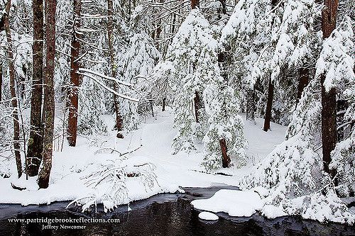Brook-Side | The previous evening's snow coated the forest d… | Flickr