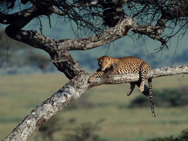 Tanzanie : safari en pays masai