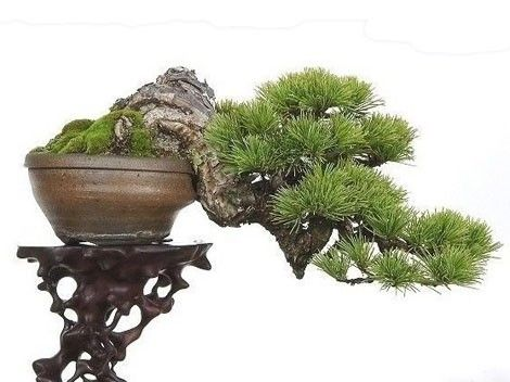 the-green-page: miniature trees