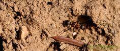Ameisen bekämpfen – Die 7 besten Hausmittel gegen Ameisen...