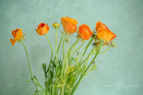 Fine Art Nature Photograph Dazzling Burnt by HelenMPhotography, home decor, interior design, home art, Ranunculus, Spring, Textured Wall, Photograph turned Painting