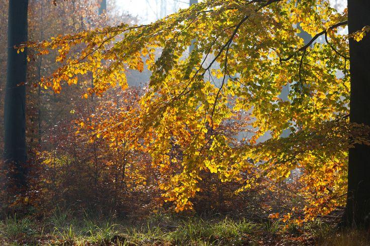 [8/15]  Ciekawostką jest malownicze jezioro Szmaragdowe, które powstało w miejscu zalanej w 1925 roku przez wody podziemne kopalni wapieni kredowych. W lasach Puszczy Bukowej rośnie 18 gatunków storczyków i 328 gatunków grzybów. Ze zwierząt spotkamy m.in. lisa, borsuka, gronostaja, łasicę oraz sarny, jelenie i dziki.