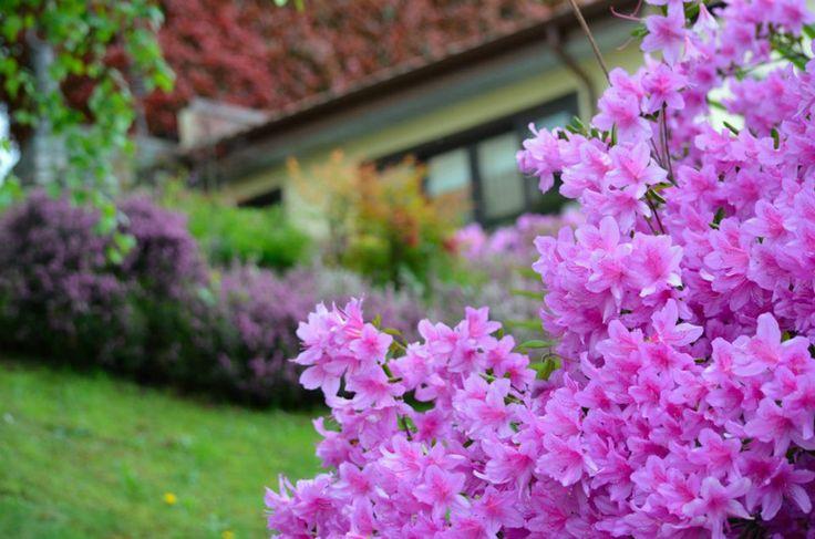 Villa Erica in fiore! - HQ di #ALTEASpA - Feriolo di Baveno (VB)