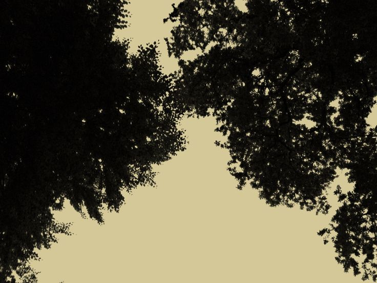 Eiken met tegenlicht. Fotografie, natuur. iPhone 4S.
