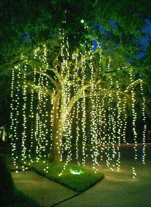 outdoor wedding lighting idea: hang strands from tree branches to lighten an evening reception.