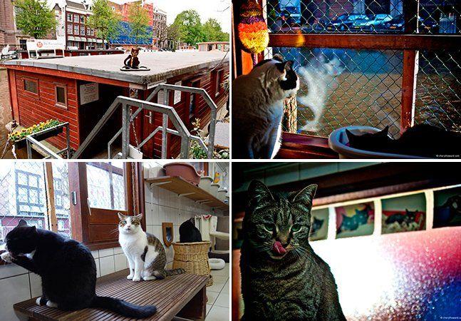 Você já deve ter ouvido falar sobre pessoas que moram em barcos, mas e gatos? Em Amsterdã há um barco exclusivo para felinos que moravam nas ruas e que, apesar de não gostarem muito de água, agora têm um lar: o De Poezenboot (o barco dos gatos, em português). A iniciativa começou na década de 60, quando Hariette van Weelde resolveu dar abrigo a uma família de gatos que vivia em uma árvore próximo onde ela morava, na frente do canal Harengracht. Depois da primeira família de bichanos, o…