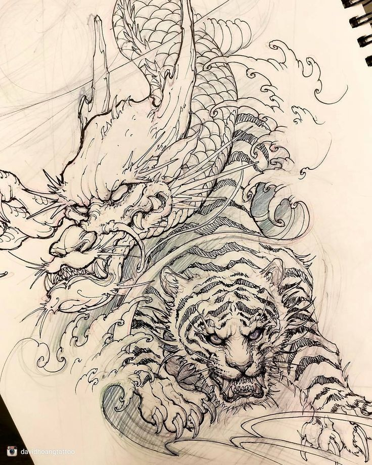 Superb work from @davidhoangtattoo check out their page for more great art. Dragon and tiger sketch. #chronicink #asiantattoo #asianink #irezumi #tattoo #sketch #illustration #drawing #dragon #tiger #irezumicollective