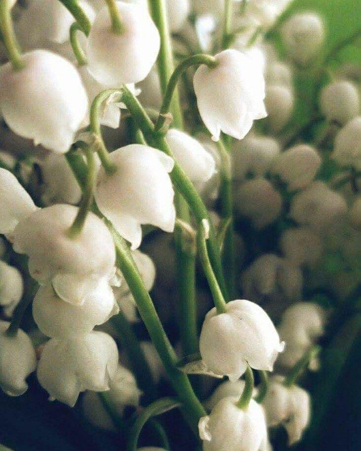 #Flowers #photo #white