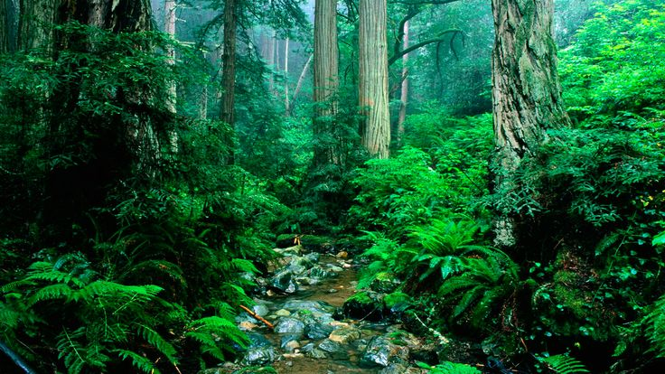 nature.jpg (1920×1080)