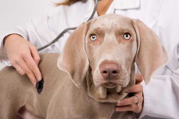 Be a competent and successful vet nurse