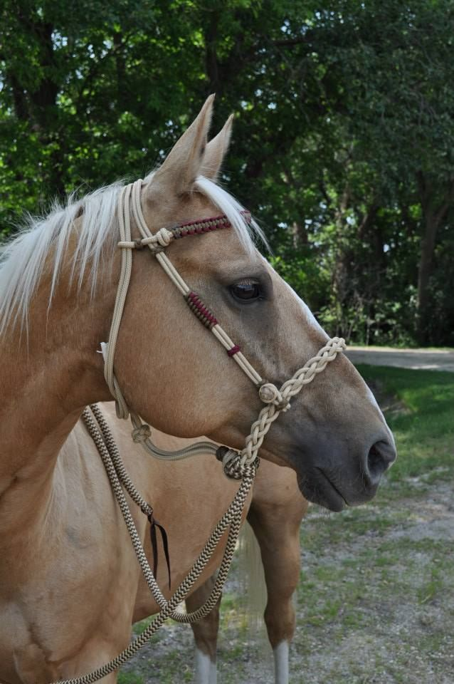 Loping Hackamore from L &M Custom Tack